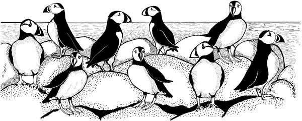 Puffins Border Unmounted Rubber Stamp