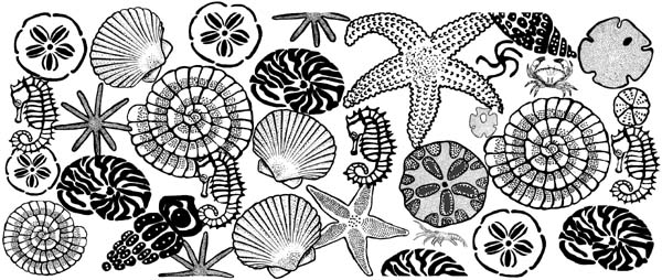 Sea Shells Border Unmounted Rubber Stamp
