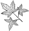 Botanical Leaf Cluster Wood Mounted Rubber Stamp
