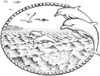 Dolphins Unmounted Rubber Stamp Kit