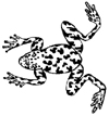 Frog Little Stamper