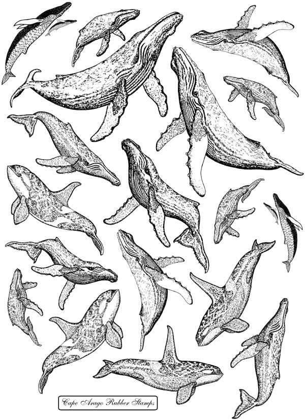 Whales Unmounted Rubber Stamps